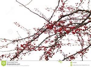 Baum Mit Roten Beeren : beeren baum lizenzfreies stockbild bild 1686696 ~ Markanthonyermac.com Haus und Dekorationen