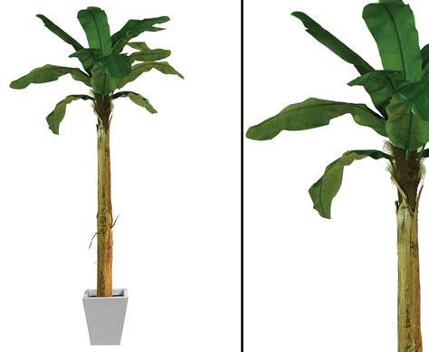 papyrus pflanze kaufen papyrus pflanze 225 bl 228 tter h 246 he ca 90cm g 252 nstig kaufen