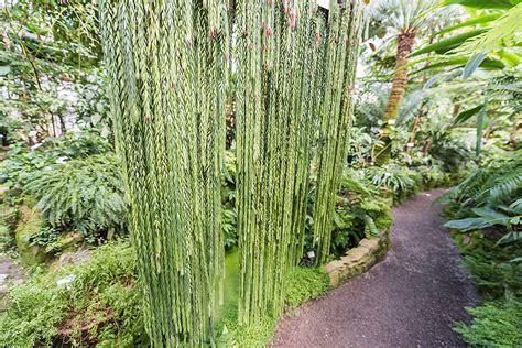 Botanischer Garten Heidelberg Pflanzenbörse by Heidelberg Botanische G 228 Rten In Heidelberg