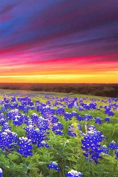 Texas Landscape Nature Bluebonnets Landscapes Sunrisesunset 4pint
