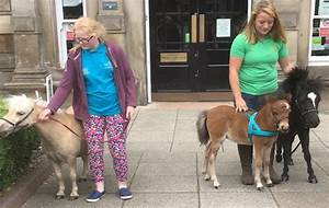 Young Miniature Set To Become Guide Horse For The