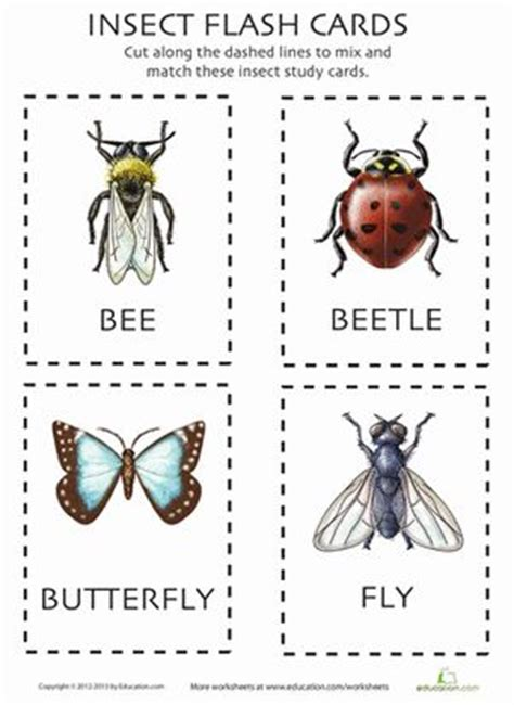 insect flashcards  images flashcards bugs