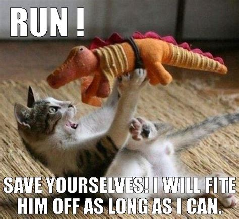 Cat Fight Meme - 22 best funny fight pictures