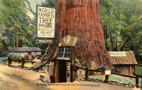 lilley redwood park   redwood highway redwoods ca