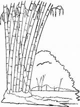 Bamboo Coloring Pages Tree Printable Trees Recommended Mycoloring sketch template