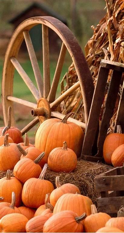 Pumpkins Autumn Harvest Iphone Pumpkin Fall Wallpapers