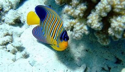 Animals Wallpapers Aquatic Ocean Cave