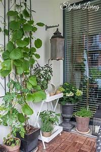 Kletterpflanzen Für Balkon : balkonbegr nung und kletterpflanzen die jede wand glamour ser aussehen lassen my home ~ Buech-reservation.com Haus und Dekorationen