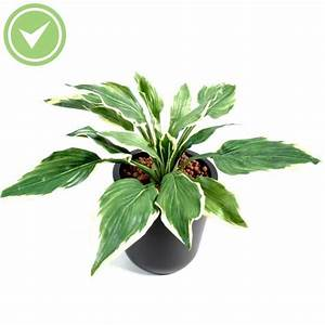 Fausse Plante Verte : plante verte haute maison et fleurs ~ Teatrodelosmanantiales.com Idées de Décoration
