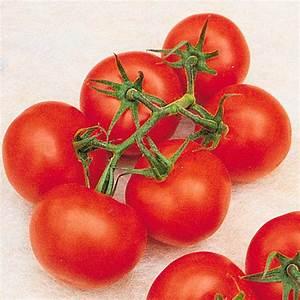 Dünger Für Tomaten : pflanzenfutter f r tomaten 5 kg von g rtner p tschke ~ Watch28wear.com Haus und Dekorationen