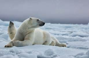 Animal Facts About Polar Bears