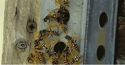 Wasps Swarming Beware Canyon Lake Creek Mouth