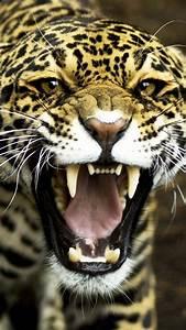 Coloriage Tete De Jaguar Imprimer