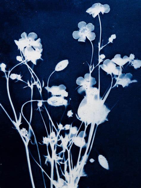 cyanotype peter mrhar