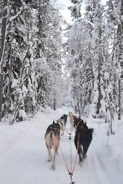Laponie Huskies Rovaniemi Safari Ferme Husky Voyage