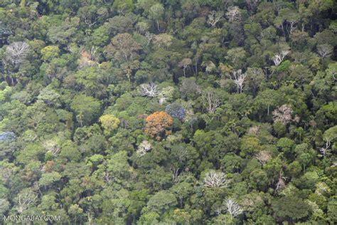 flowering trees   rainforest canopy