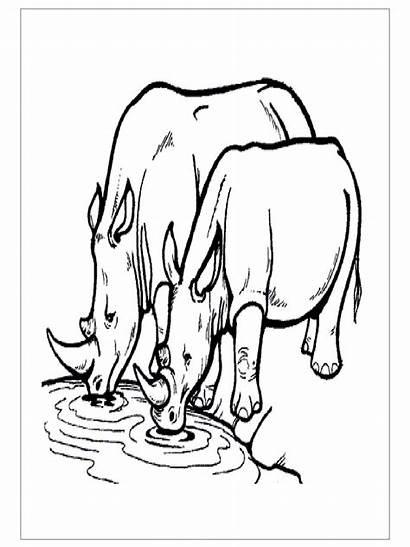 Rhino Coloring Preschool Pages Animals Printable Kindergarten