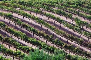 Arrosage Goutte à Goutte Professionnel : irrigation plein champ par goutte goutte enterr ~ Dailycaller-alerts.com Idées de Décoration