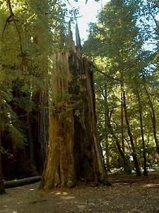 Big Basin Redwoods State Park (Boulder Creek) - 2018 All ...