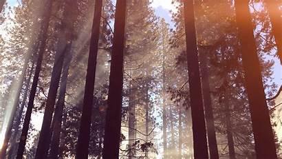 Forest Wood Nature Summer Tree Macbook Desktop