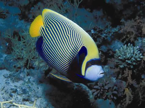 imagen zone fondos de pantalla animales marinos fondo