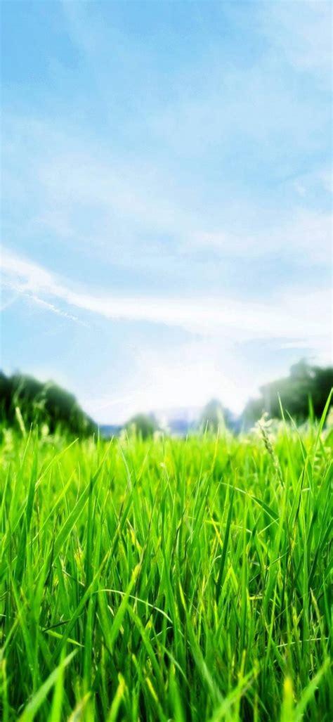 Green Grass Hd 1080x2340
