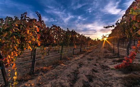 Fjord Vineyards by Vignoble Vignes Fond D 233 Cran Hd