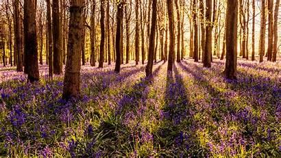 Forest Flowers Landscape Desktop Background Flower Nature