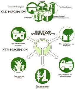 Tropical Rainforest Types Plants