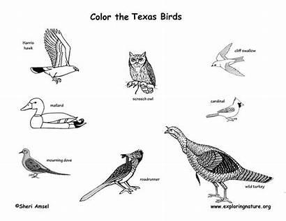 Birds Texas Coloring Mammals Amphibians Reptiles State
