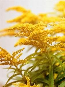 Welche Blumen Blühen Im August : f r balkon und garten gelbe blumen und pflanzen ~ Orissabook.com Haus und Dekorationen