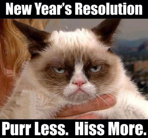 New Cat Memes - grumpy cat new year yes memes