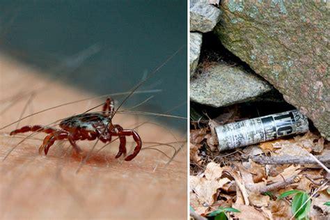 rid  ticks pest control houselogic