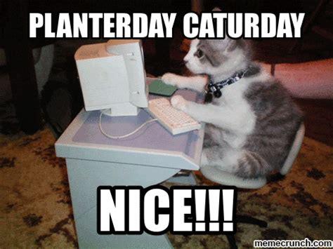 Caturday Meme - planterday caturday