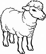 Sheep Coloring Outline Pages Drawing Male Line Alpha Farm Colouring Cartoon Printable Bighorn Animals Christmas Template Minecraft Face Coloringsky Sheets sketch template