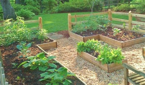 starting your family vegetable garden redeem your ground