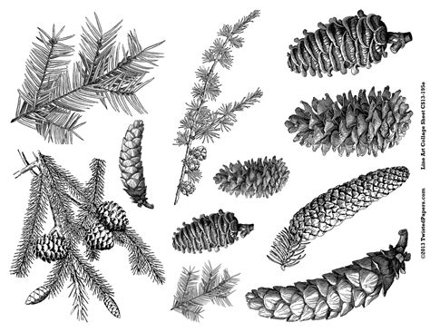 The Chew Templates Pine Cones Animals by Pine Cones Pine Needles Line Art Illustrations For Mixed