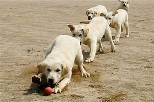 Cloned+Sniffer+Dogs+Begin+Training+Korea+LqQEzXUtP03l.jpg