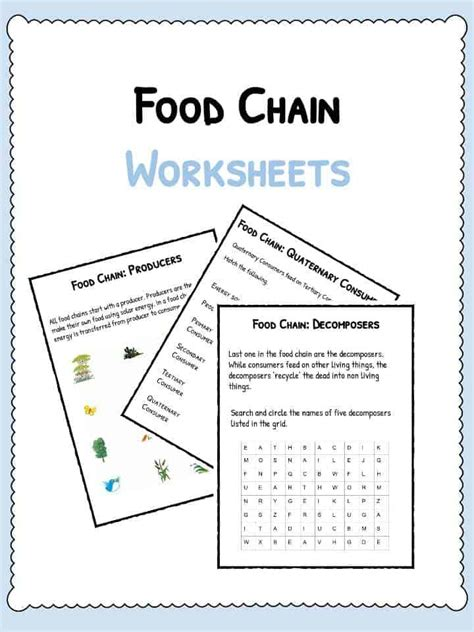 Food Chain Worksheets  Pdf Downloadable Lesson Resource