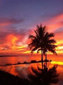 Sunsets, Palm trees and Palms on Pinterest