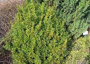 Wann Wird Lavendel Geschnitten : buchsbaum schneiden wann buchsbaum schneiden wann bild ~ Lizthompson.info Haus und Dekorationen