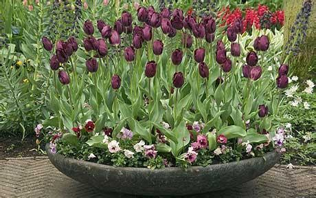 il giardino in fioriera 17 le composizioni per marzo e