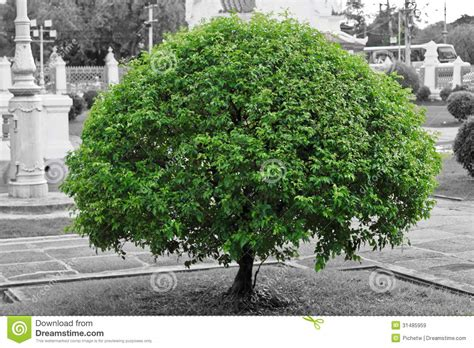 Royalty Free Stock Images Green Tree With Black And White