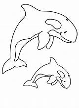 Whale Coloring Pages Print sketch template