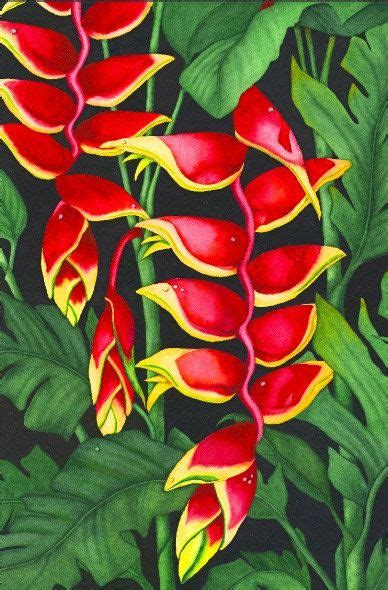 heliconia color heliconia color watercolor painting heavenly heliconia