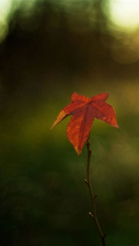 Pin by Cherie Westover on When Autumn Leaves Start to Fall | Landscape, Leaves, Autumn leaves