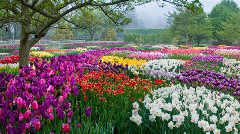 Spring Blooms Season