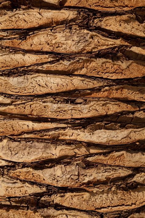 images tree nature rock abstract plant wood