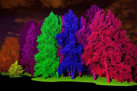 illumination tree lights at morton arboretum chicago