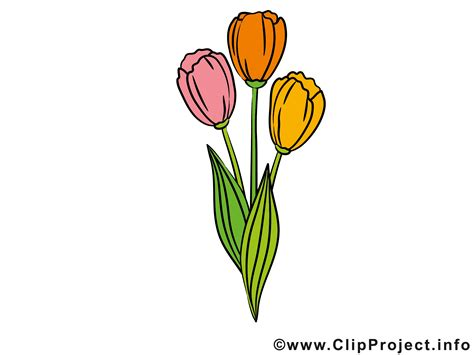 www clipart tulpen clipart